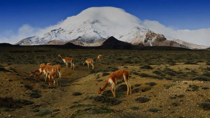 Fauna de Chimborazo